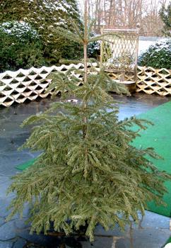 Weihnachtsbaum quirl